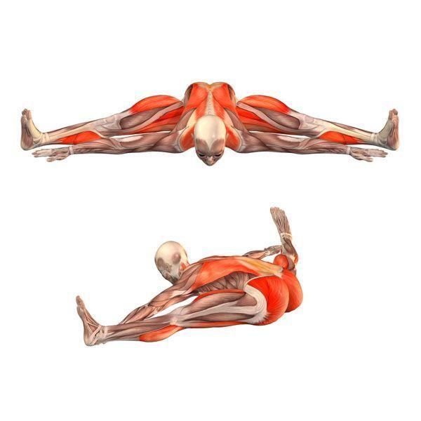 Wide-angle seated forward bend - Upavishtha Konasana advanced - Yoga ...