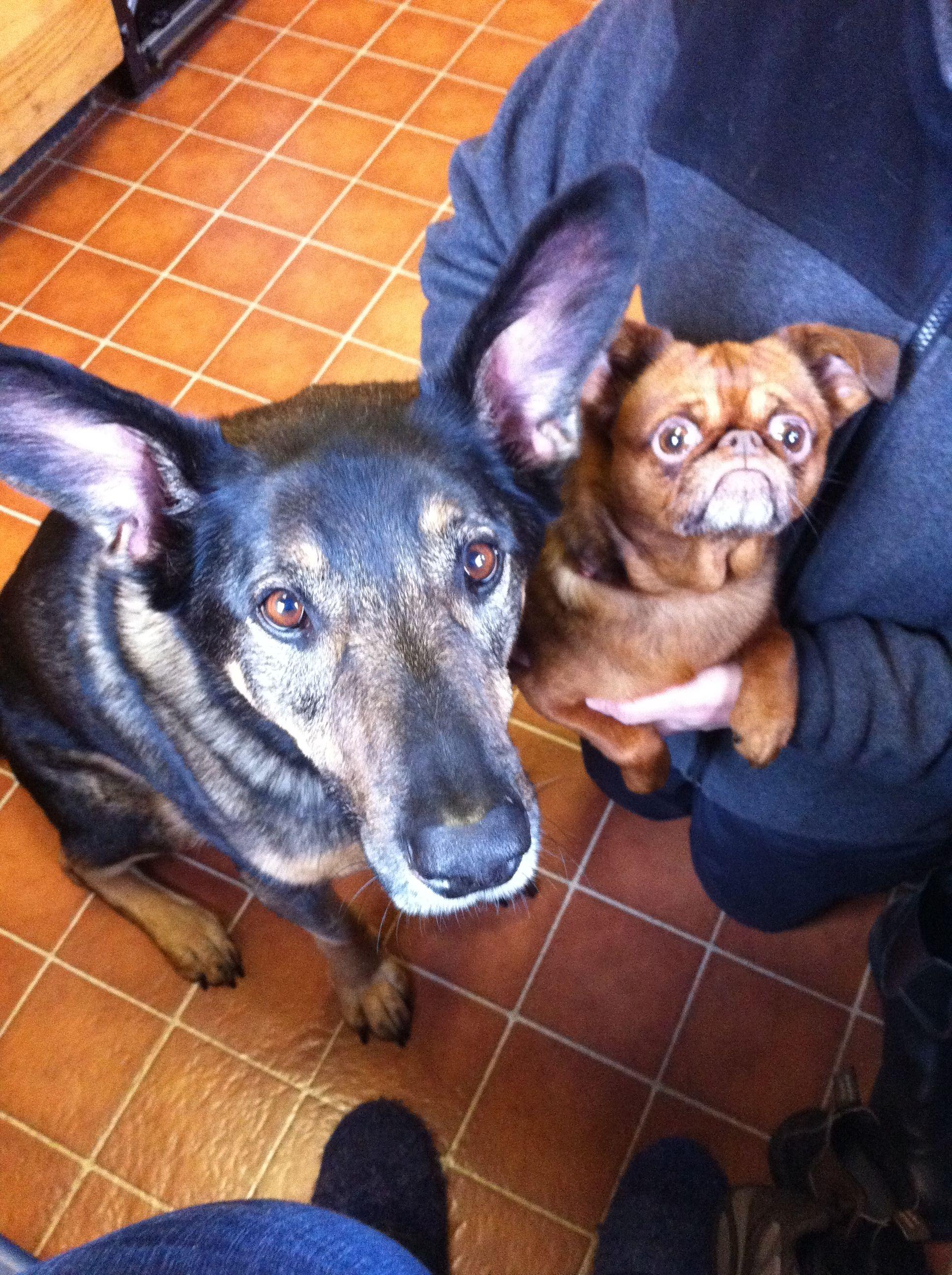 Ace & Java - Jill & Hannah's Dogs