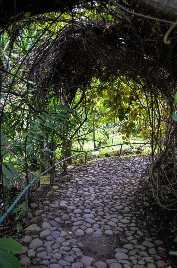 Jard n bot nico la laguna la libertad el salvador for Jardin botanico el ejido