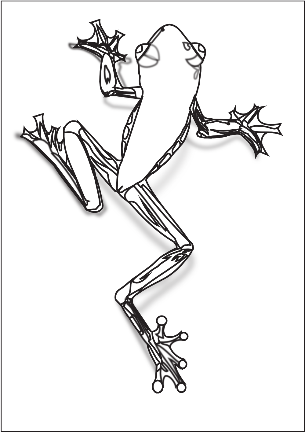 treefrog coloring pages Pinterest Frogs, Tree frogs