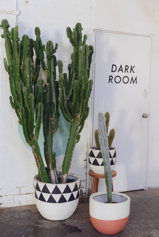 Indoor Cactus Plants Garden Planters Nook Pot