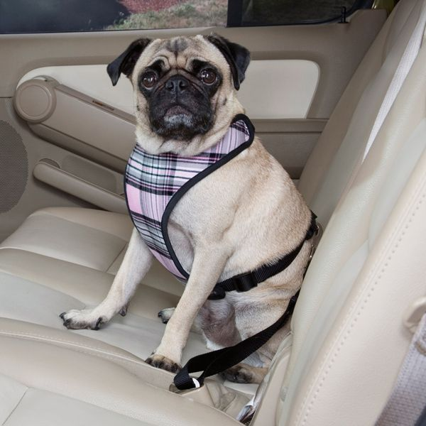 Plaid Car Harness By Guardian Gear My Dog Maya Has This Harness
