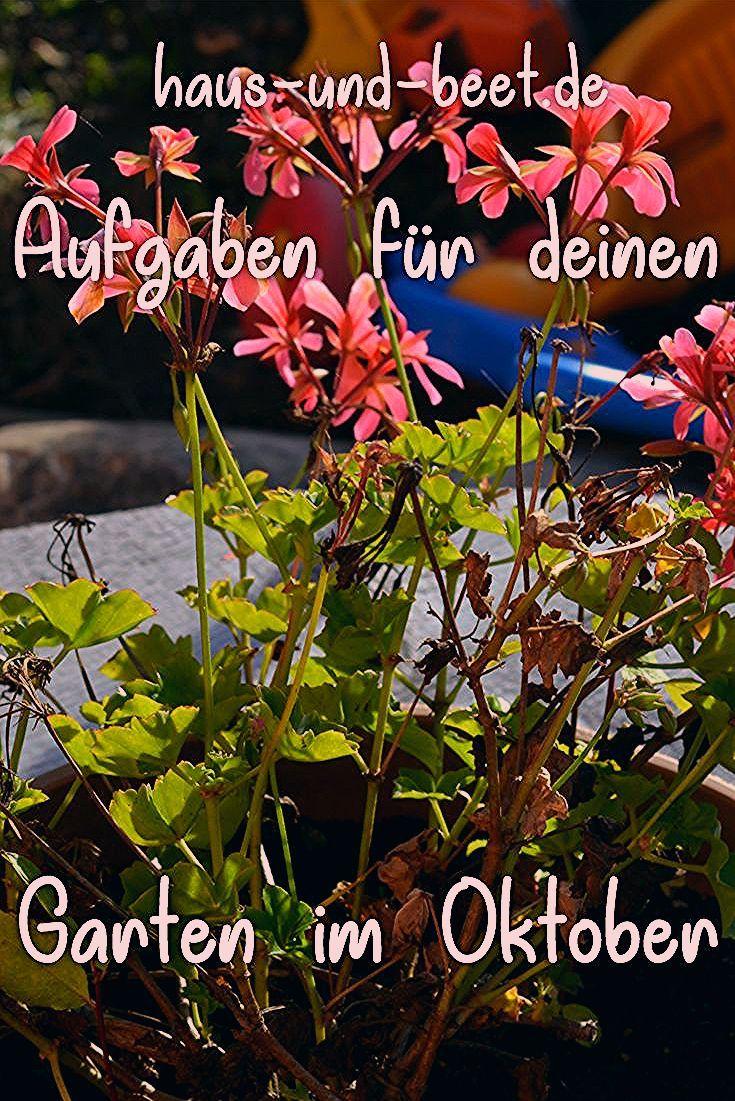 Photo of Der Garten im Oktober – Was gibt es zu tun? – Haus und Beet