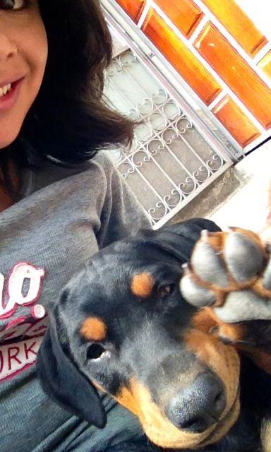 Cachorro saludando a la cámara