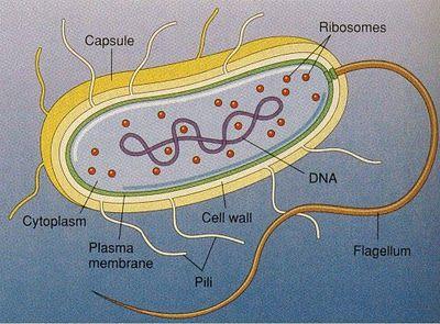 Epingle Par Amy Calton Sur School Stuff Enseigner La Biologie Biologie