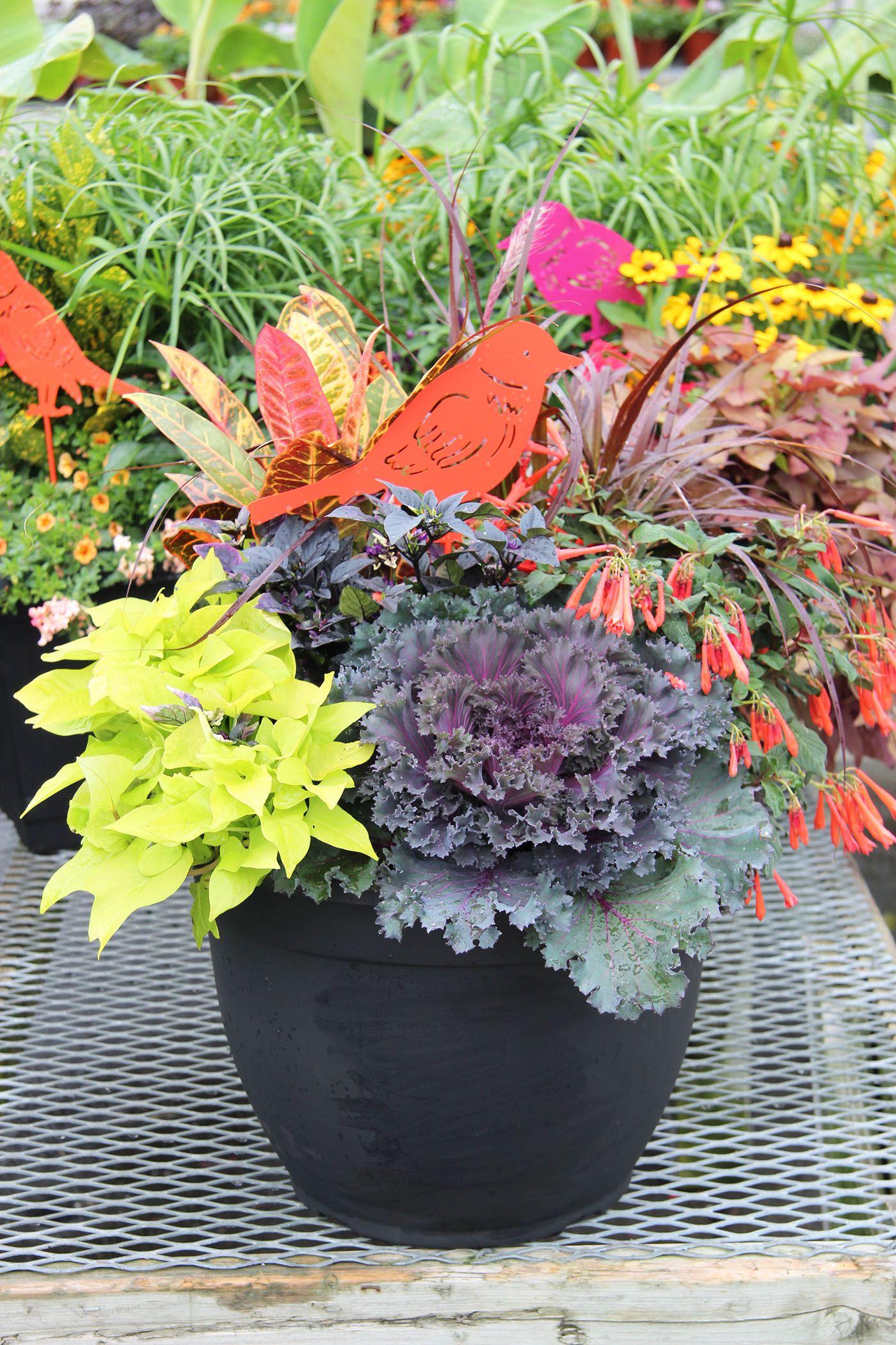 Fresh fall planter Fall planters, Fall container gardens