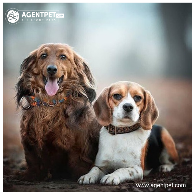 The Bond With A True Dog Is As Lasting As The Ties Of This Earth Will Ever Be Konrad Lorenz Agentpet Buyandsell Pet Pets For Sale Pets Online City Pets