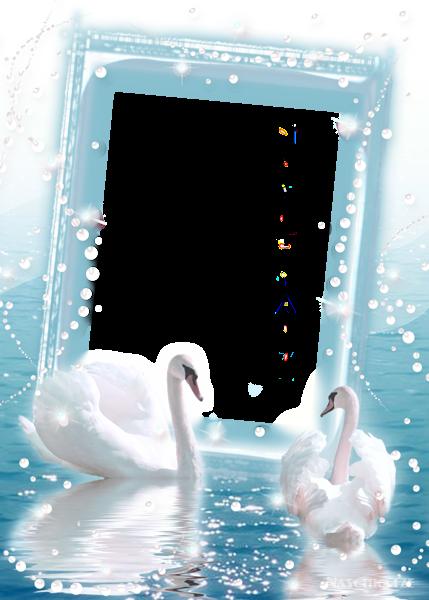 Transparent Photo Frame With Two Swans منتدى مدينة قطنا