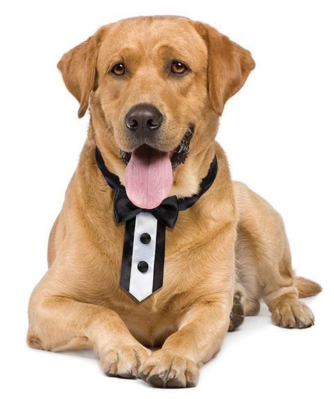 Beautiful Dog Collar Bow Adorable Dog - 6d7a0423f27c6c97e19fb0bcb98eb50e  Gallery_100128  .jpg