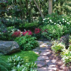 Неприхотливые тенелюбивые растения для сада многолетние и ...