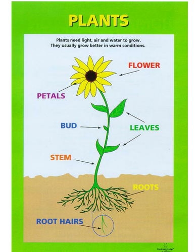 parts of a plant cell and their functions front yard