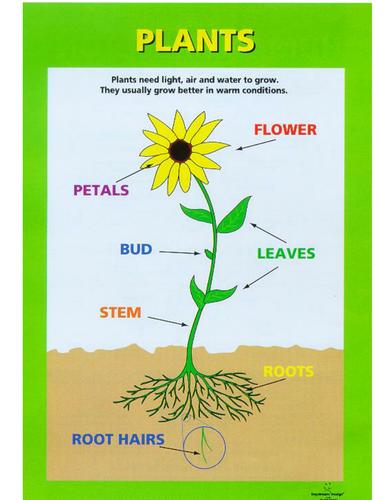 parts of a plant.doc Parts of a plant, Plant science, Plants