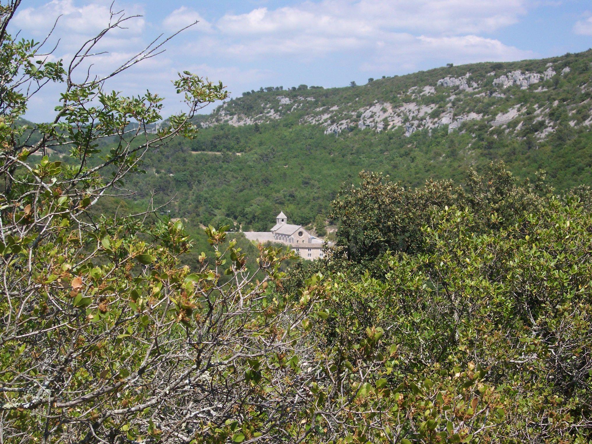 Abbaye de Sénanque ( Vaucluse )