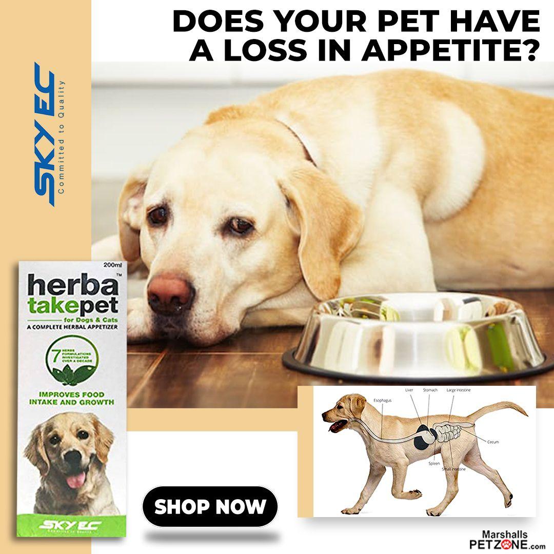 Pin on Pet Deals