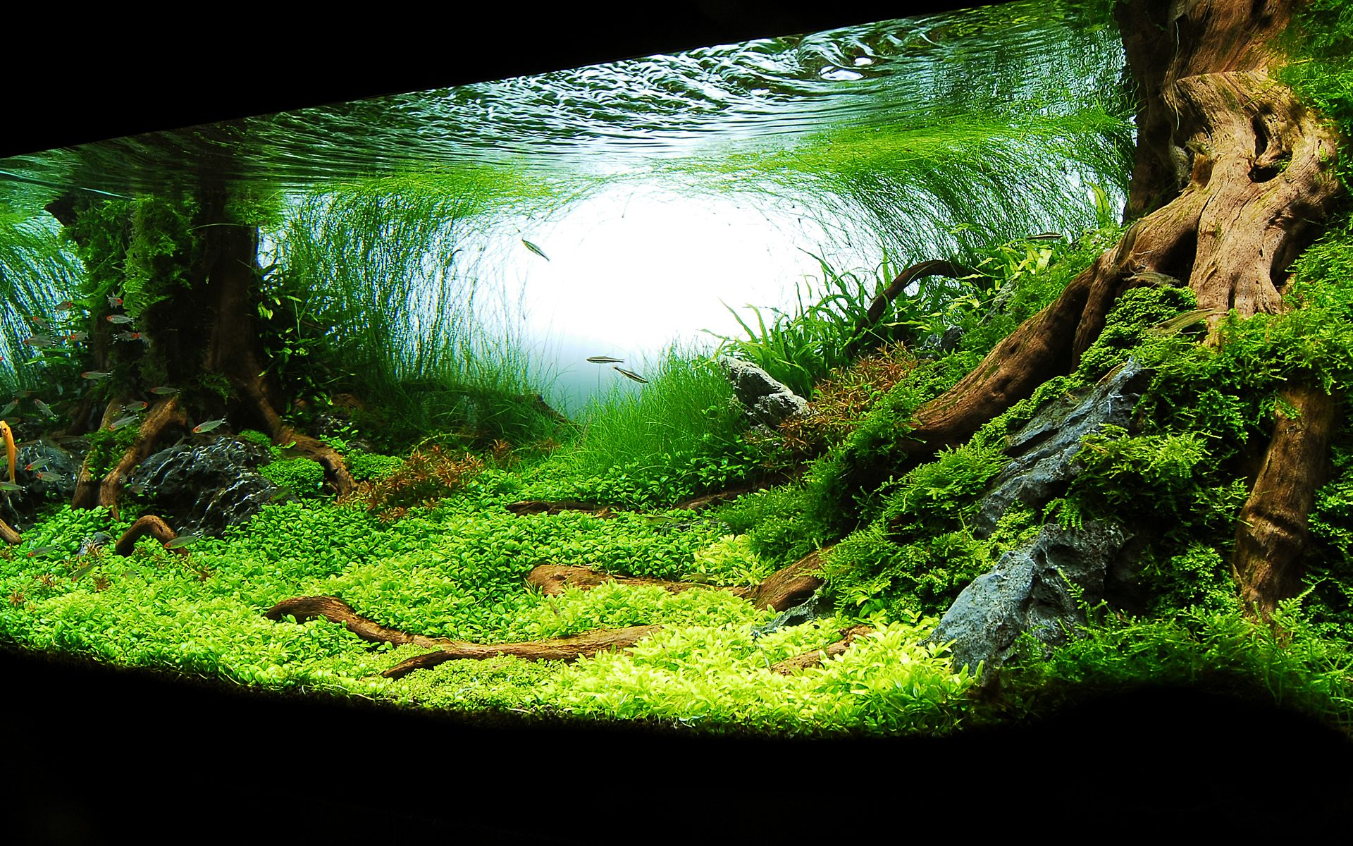Aquarium wallpaper hd for Planted tank fish