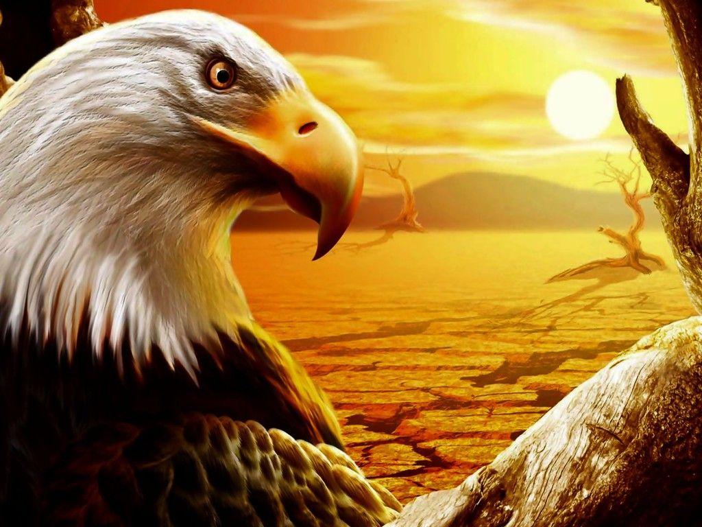 Popular Wallpaper Horse Eagle - 6d7ae456b549c23a2f795b89266a326d  2018_573199.jpg