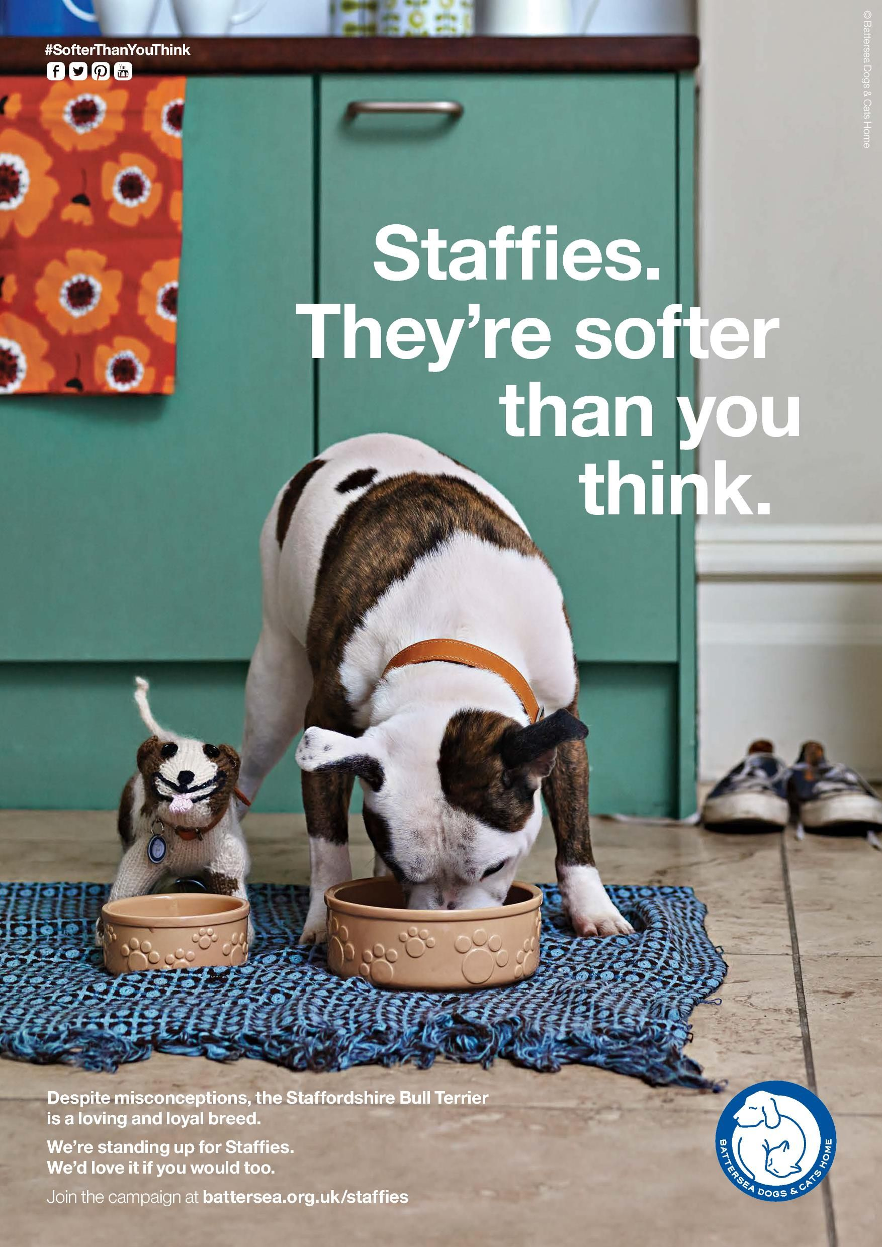 Staffies Get Involved Staffies My Animal Nanny Dog