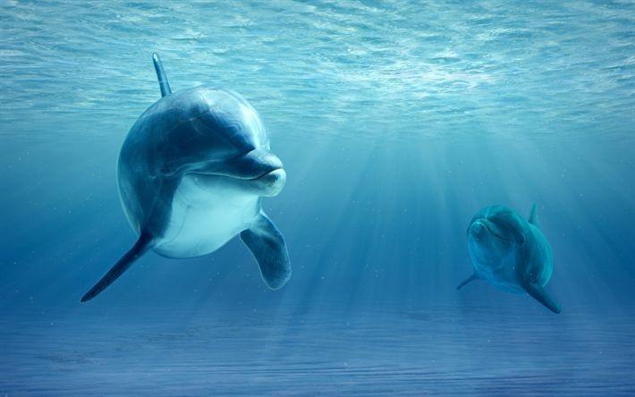 pin von cora hoffi auf delfine in 2020  ausgestopftes
