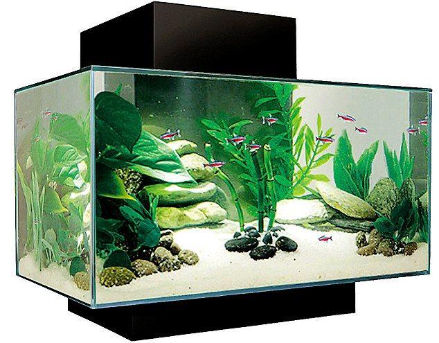 The Age Of Aquariums The 3 900 Fish Tank Fish Tank Aquarium Buy Fish Tank