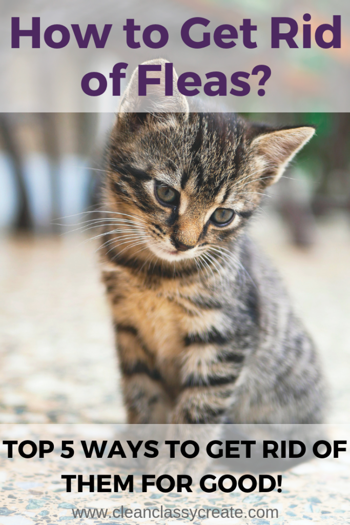 Can You Get Fleas From A Cat How To Get Rid Of Fleas In Your Home Top 5 Ways To Get Rid Of Them For Good Cat Fleas Fleas On Kittens