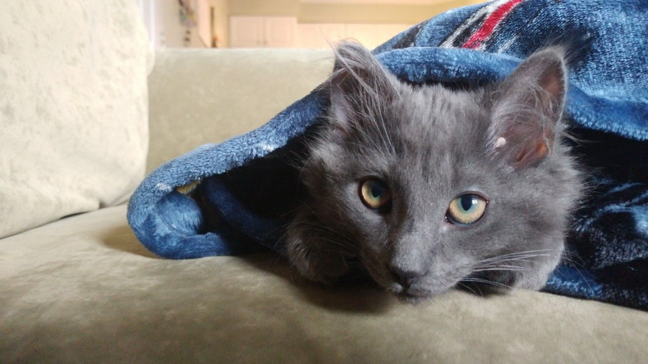 Jinn the kitten 🐱 | kitties | Cats, Kittens, Animals