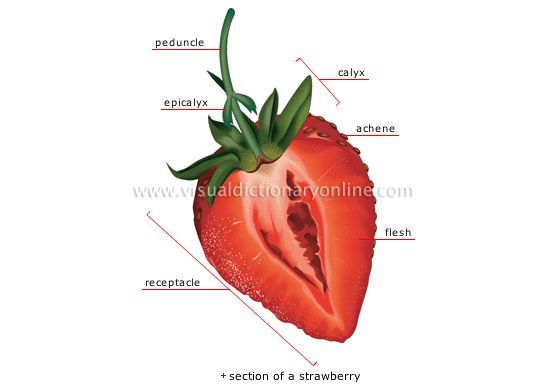 Strawberry Is An Achene A Fruit With A Dry Ovary Wall