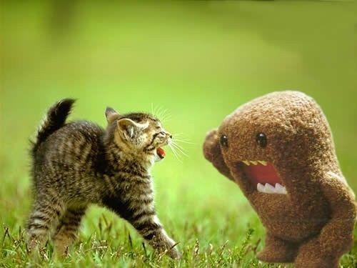 Domo Kussen Baby : Dit beeld is voor het begrip expressief. er is een kat die ergens