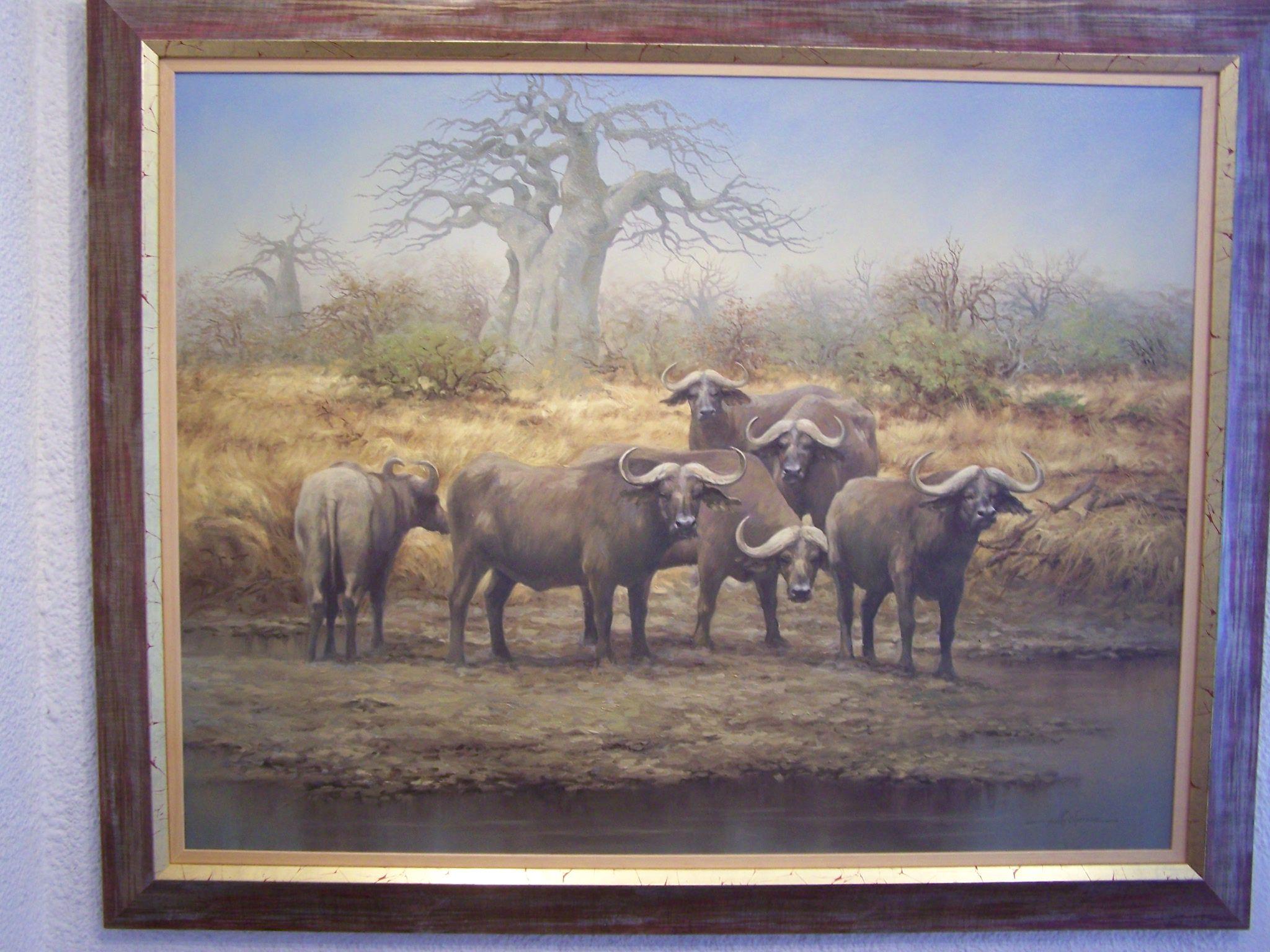savannah buffaloes