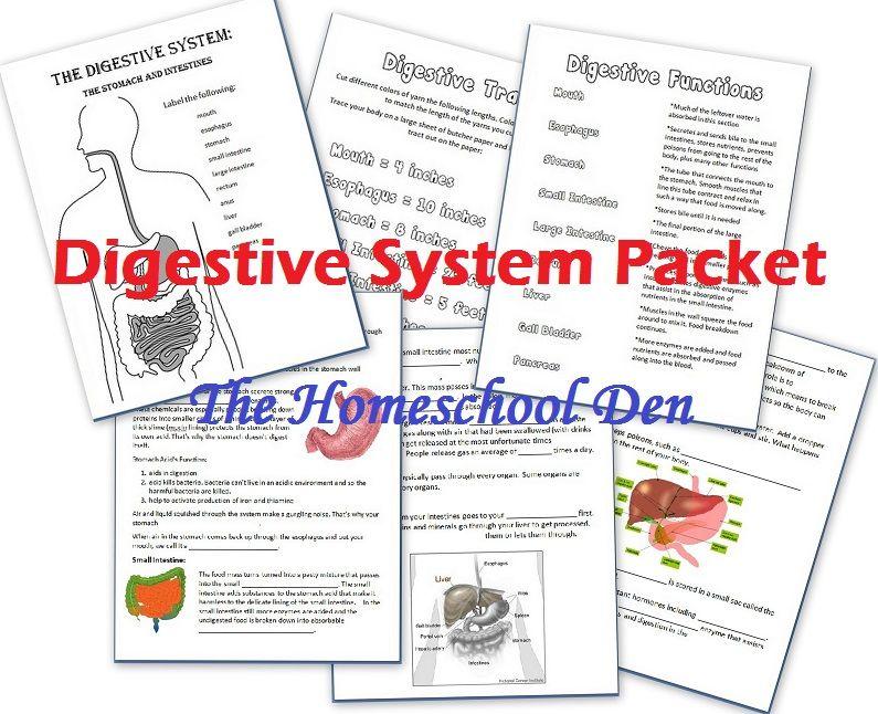 Digestive System Free Worksheets - Homeschool Den | teaching | Pinterest