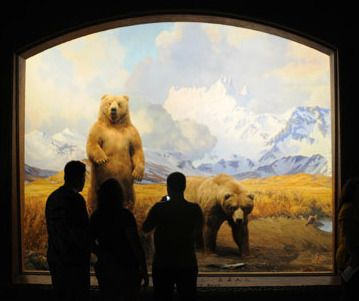 american-museum-of-natural-history-exhibit