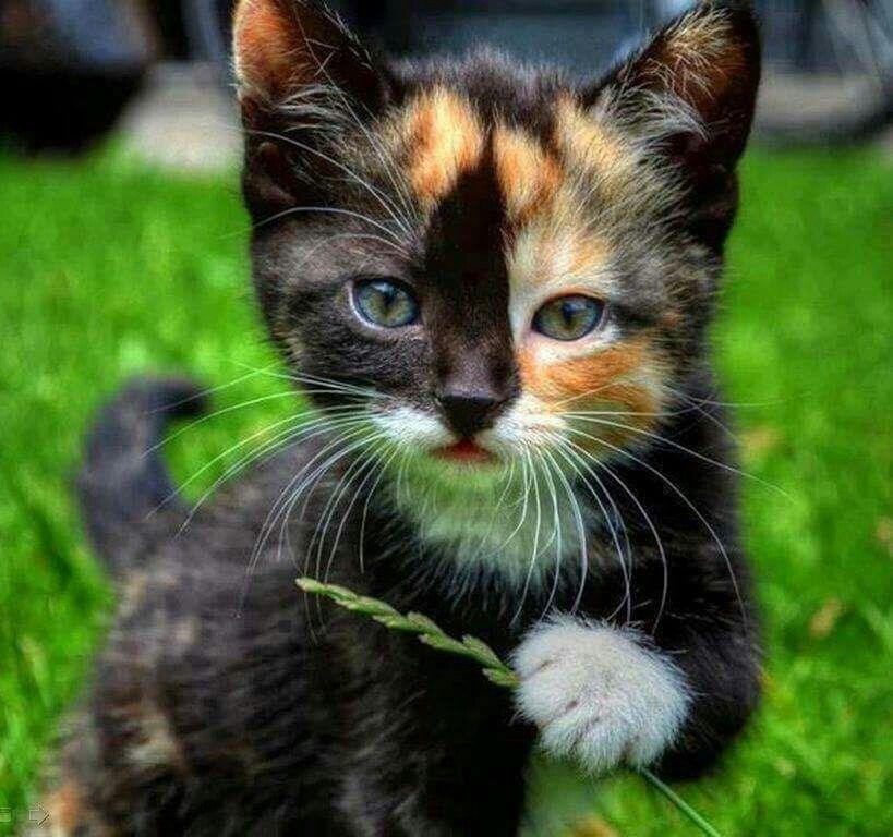 Pin von Barbara rathmanner auf Katzen (mit Bildern