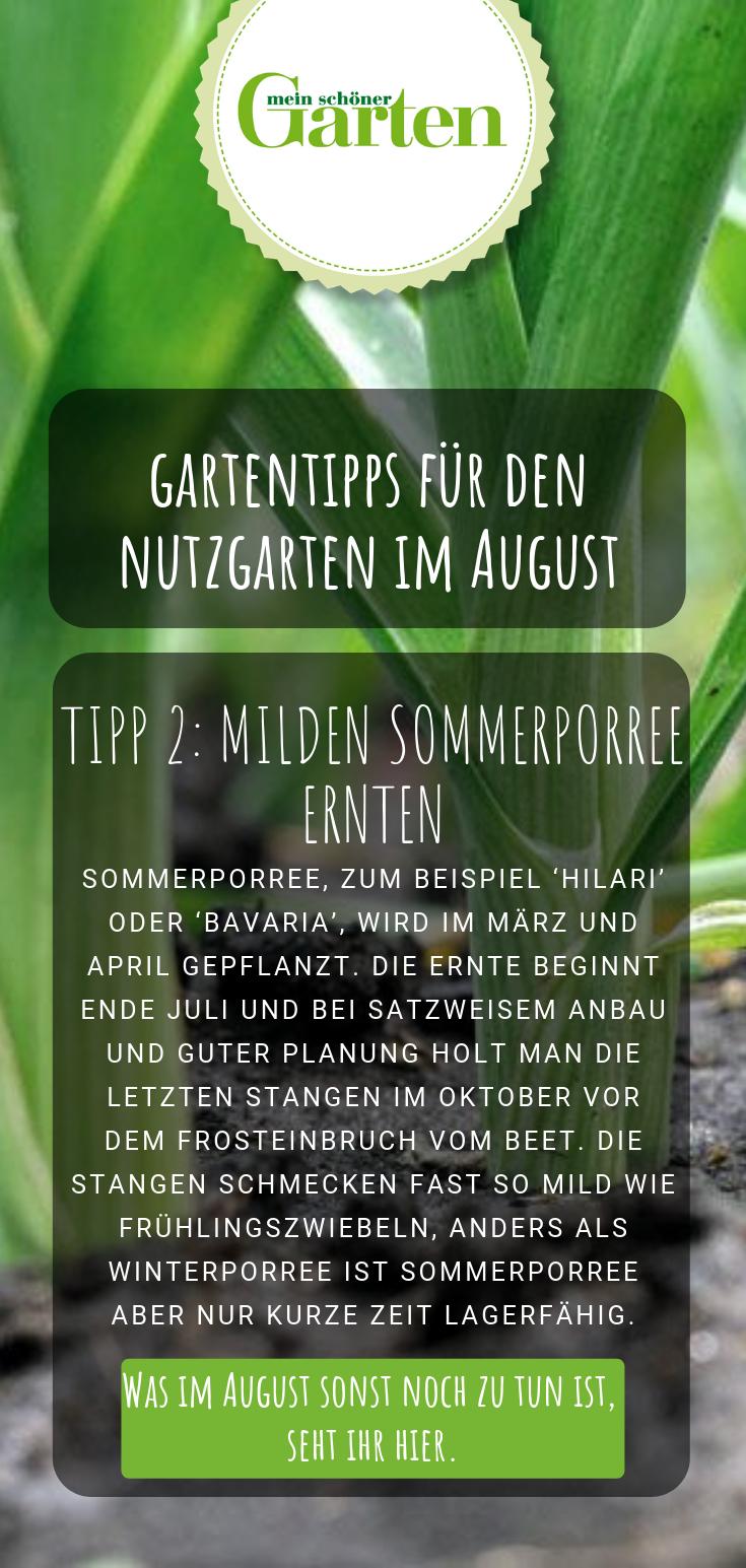 Nutzgarten Die Besten Gartentipps Im August Gartentipps Garten Essbare Pflanzen