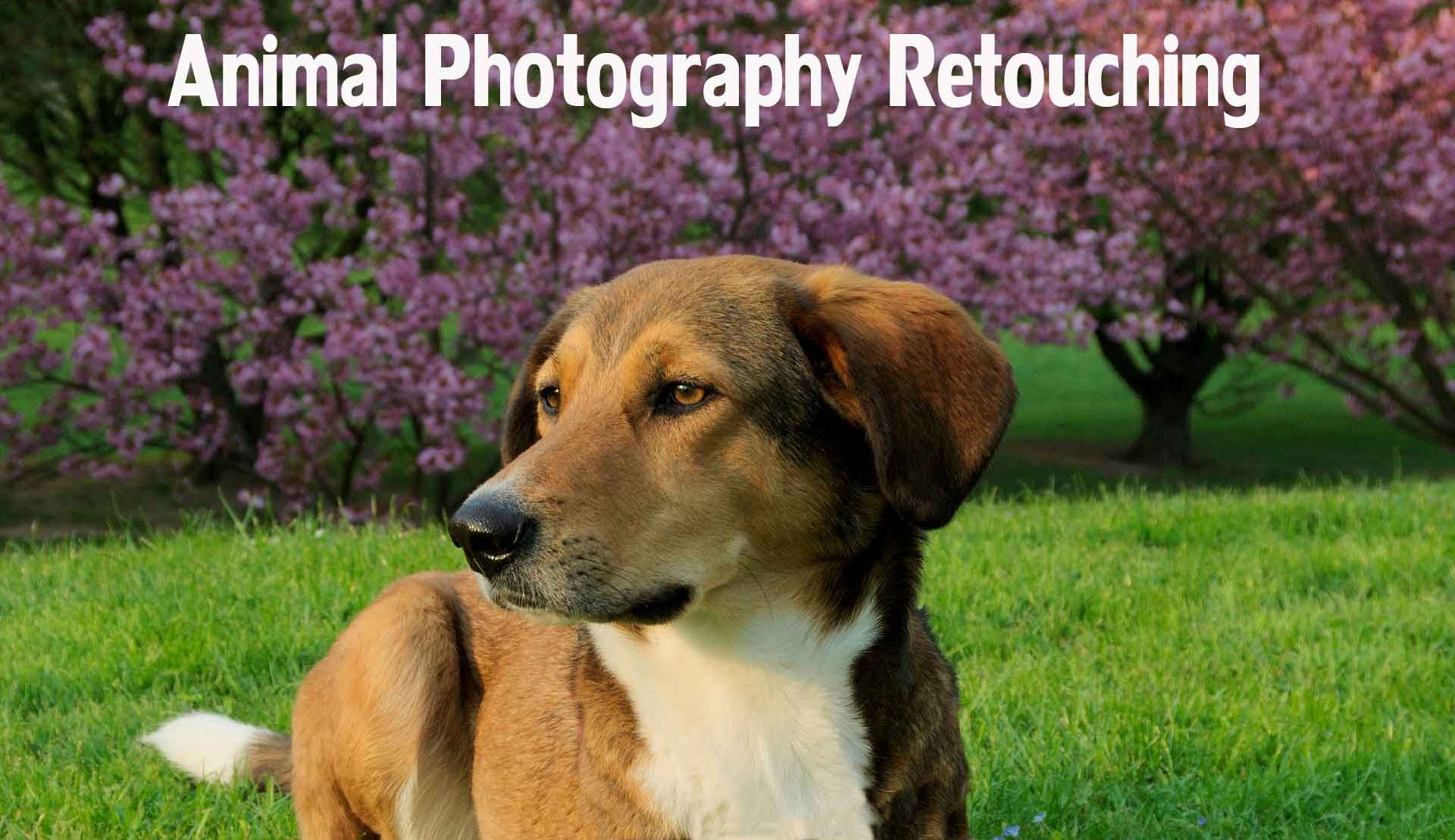 Pet Photo Editing Services Animal Photography Retouching Services Pet Animal Photo Retouching Image Editing Services To Uk Usa Norway Canada New Zeala Dogs With Jobs Animal Photo Animal Photography
