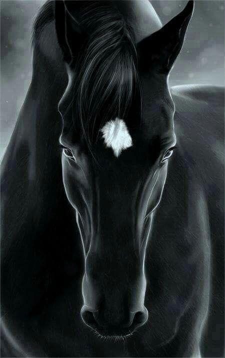 Truly Black Beauty Horse Wallpaper Horses Horse Drawings