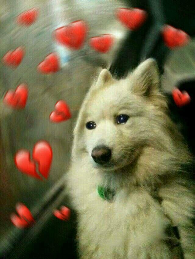 Tu En La Micro Llorando Por Tu Amor No Correspondido Xd 3 Memes Lindos Mascotas Memes Memes Divertidos