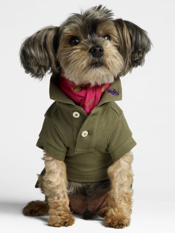 a look Miles loves: polo shirt with a flipped up collar + ascot.
