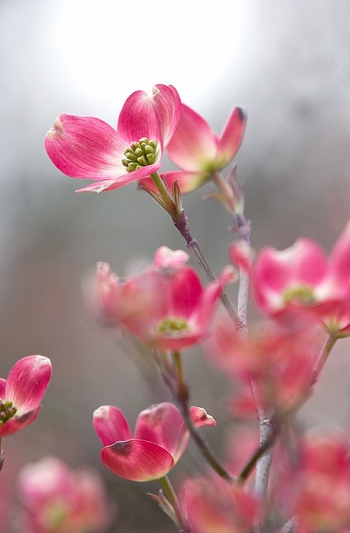 Whimsical Raindrop Cottage....Pink Dogwood Blossoms