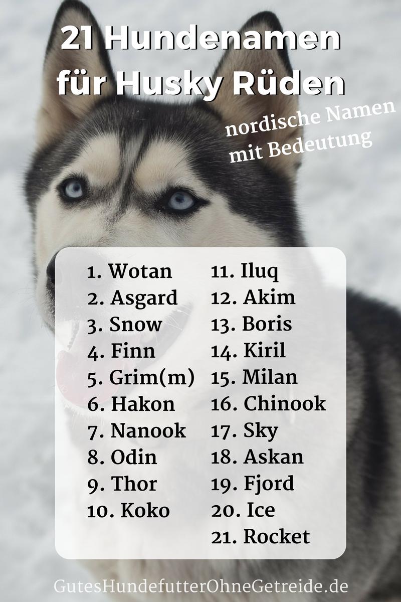 21 Hundenamen für Husky Rüden, nordische Namen mit