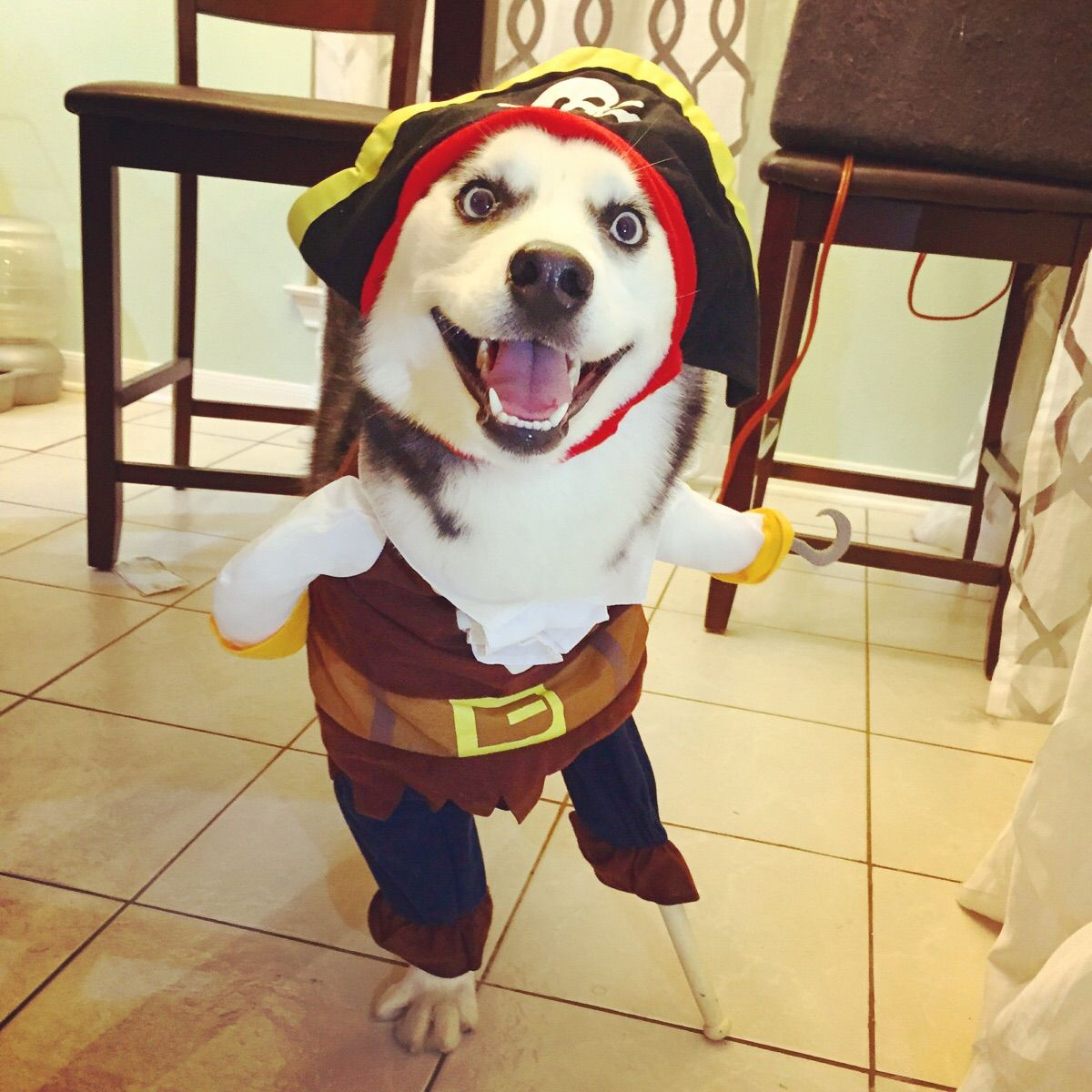 How A Three Legged Dog Celebrates Howl Oween Pet Costumes Cute