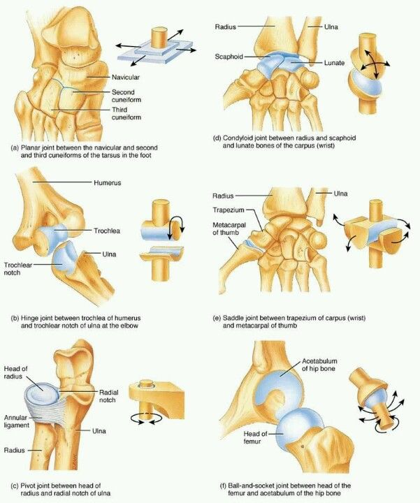 Foot And Hand Fisioterapia Pinterest Anatomy Medicine And Medical