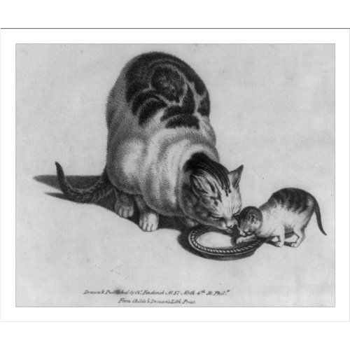 Historic Print Cat And Kitten Drinking Milk Snapshotsofthepast Com Cats And Kittens Drink Milk Kitten Drawing