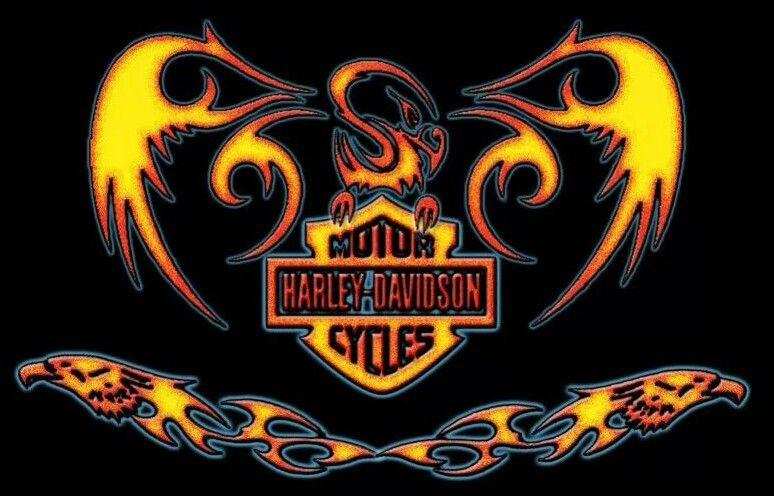 Harley Davidson Harley Davidson Wallpaper Harley Davidson Art Harley Davidson Pictures