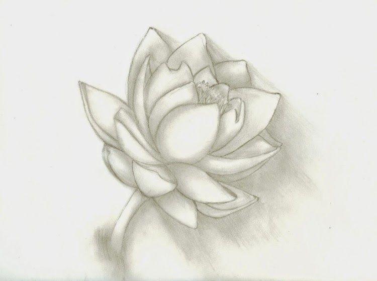 Paling Hits 30 Contoh Gambar Sketsa Bunga Teratai 39 Gambar Sketsa Bunga Indah Sakura Mawar Melati Download 16 Contoh Di 2020 Bunga Bunga Teratai Cara Menggambar