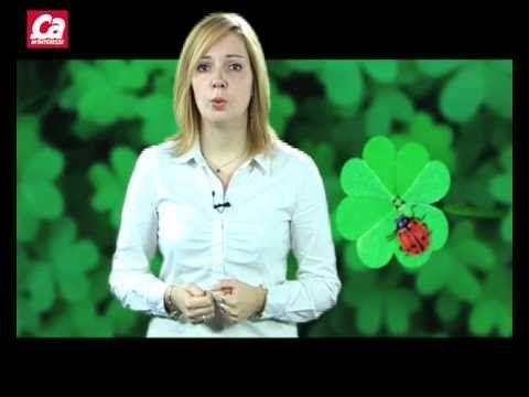 La fête de la Saint Patrick - Why don't all clovers have four leaves? vidéo en français - in French