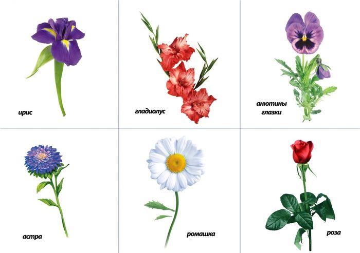 Название цветов с картинками для детей