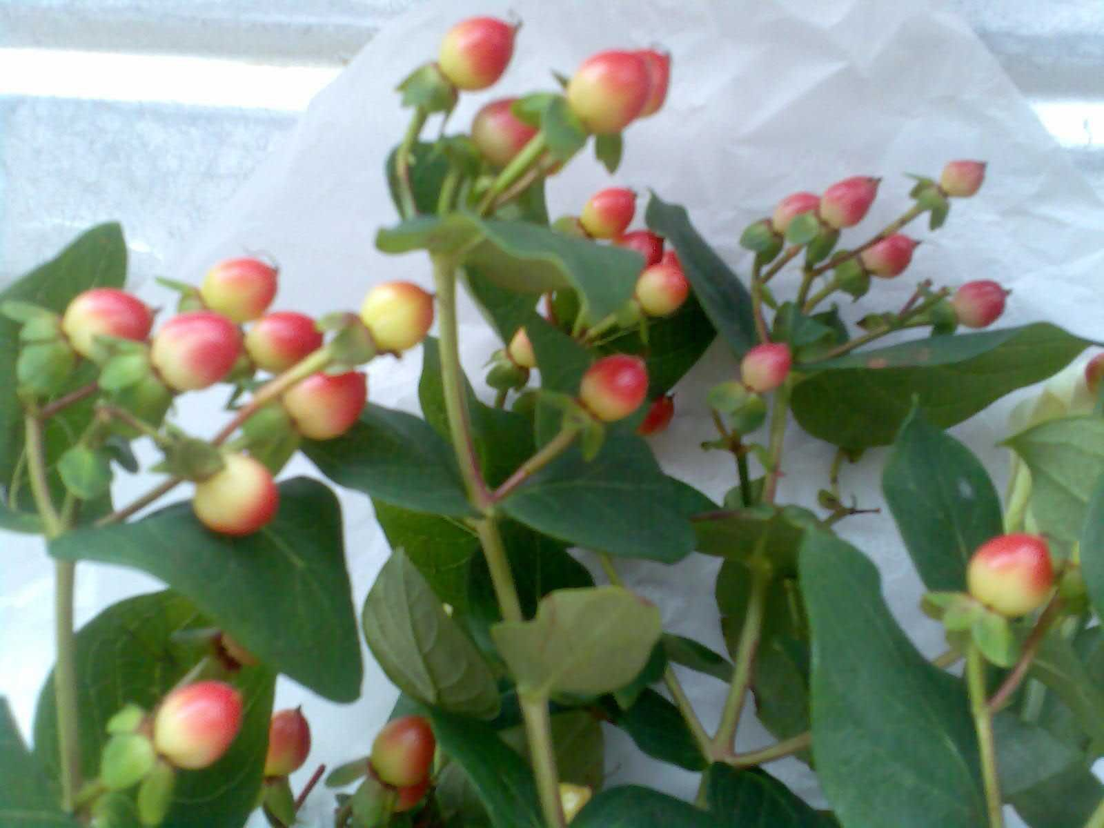 china berry bouquet google search - Common Flowers In Arrangements