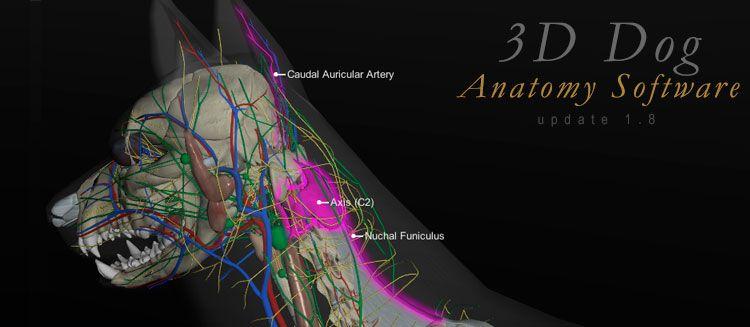 3D Canine Anatomy Software version 1.8 Update | Pinterest | Software