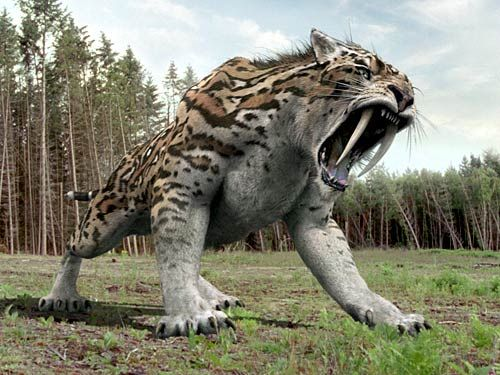 Smilodon Sabre Toothed Tiger Smilodon Extinct Animals Sabertooth