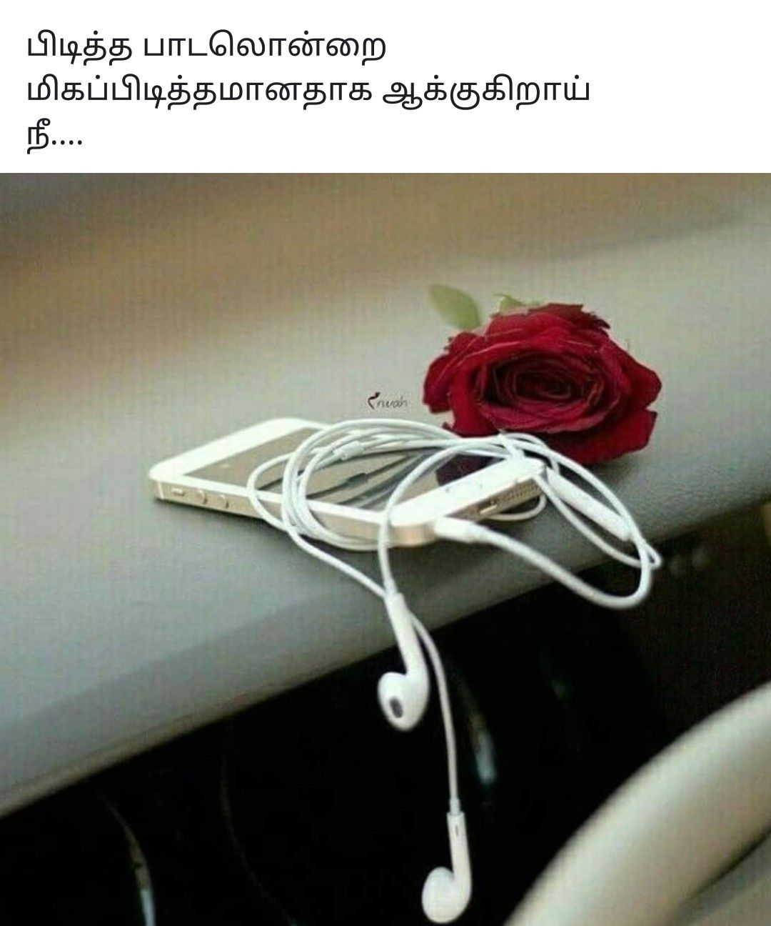 Pin by bhuvana jayakumar on Tamil quotes Red roses