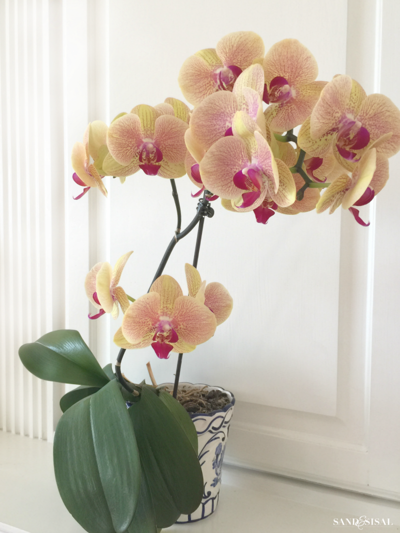 How to grow orchids a beginnerus guide yellow orchid orchid and